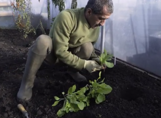 Digital Culture Hub - Reza: How to Plant Cabbages
